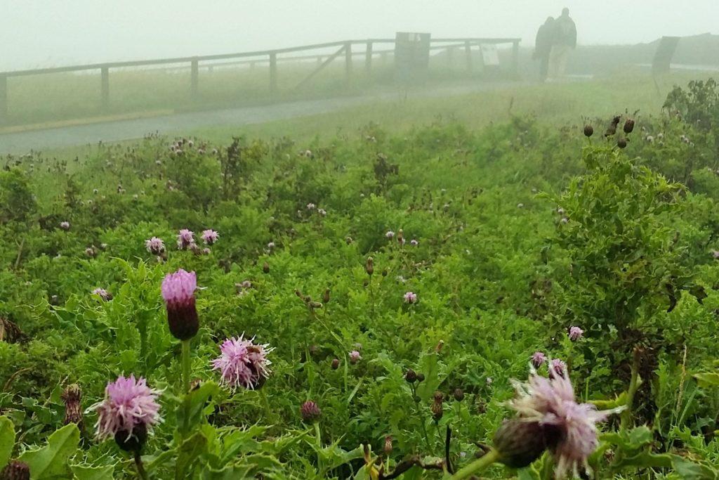 No caminho até Cliffs of Moher, paisagem é composta por gramados com flores roxas